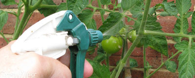 foliar-feeding.jpg